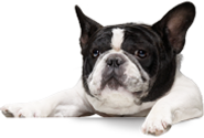 boxhead_dog01.png