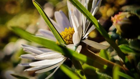 Kleine Blume blüh'