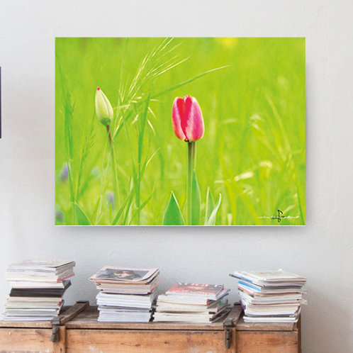 Poster Tulpe