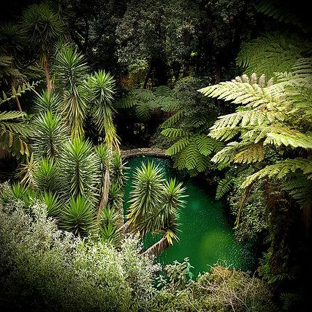 Tropical_001_1x1.jpg