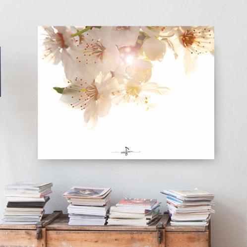 Poster Blütentraum 1