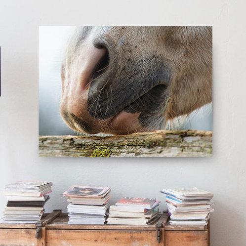 Poster Pferdenüstern