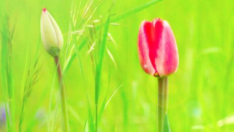 fühle den Frühling
