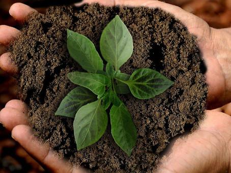 Acciones prácticas para cuidar de la Tierra