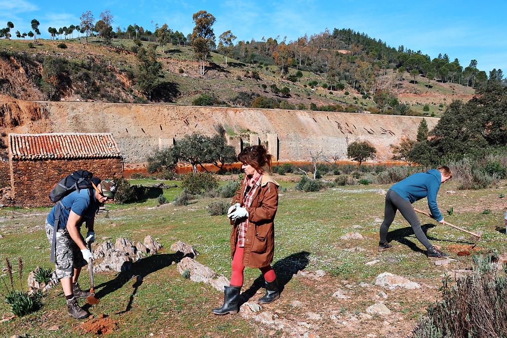 Los participantes plantando árboles