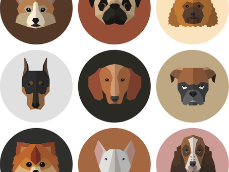 What's New with Coronaviruses?—Your Dog Nose