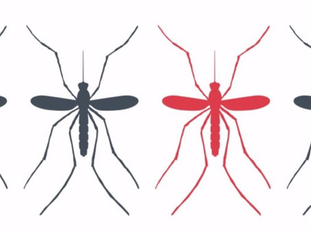 Microbes That Stop Malaria