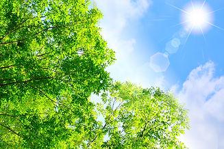 緑輝く明るい未来