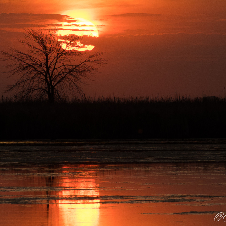 Sunset at the Marsh