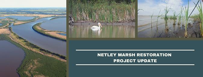 NETLEY MARSH RESTORATION PROJECT UPDATE.