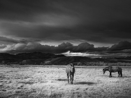 How Horses Galloped Their Way Into American History