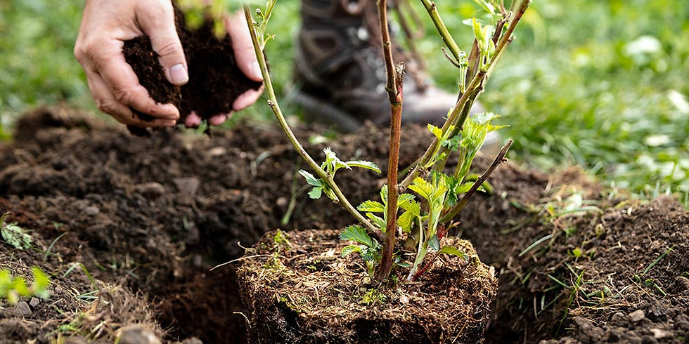 Middle Tennessee Tree Planting - Save the Date