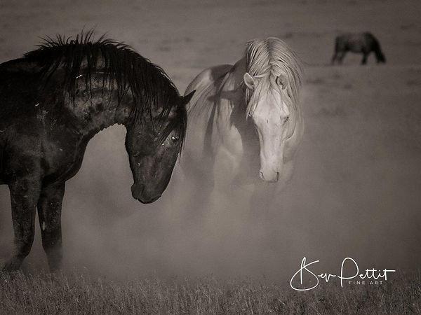 4 Bev Pettit Onaqui horses.jpg