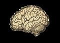 brainopacity.png
