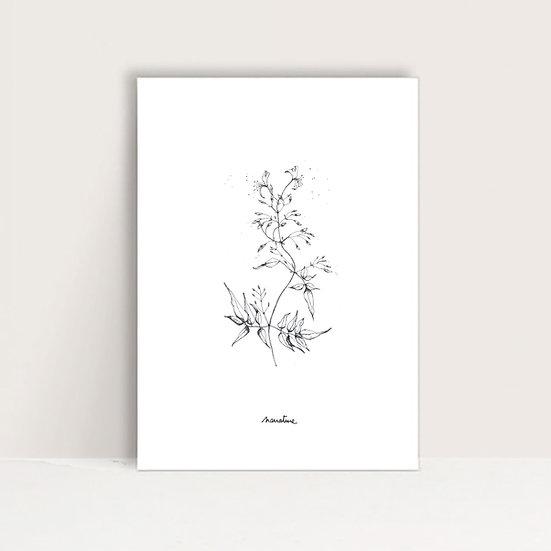 "Affichette "" Chèvrefeuille """