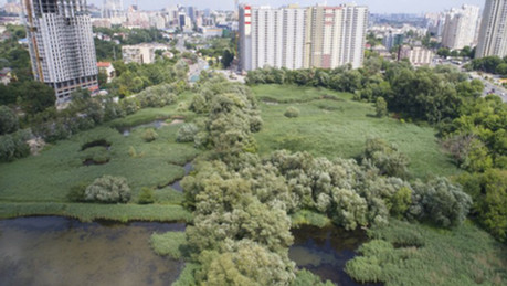 Висотки замість парку. Як екологічна комісія Київради забула про Совські ставки