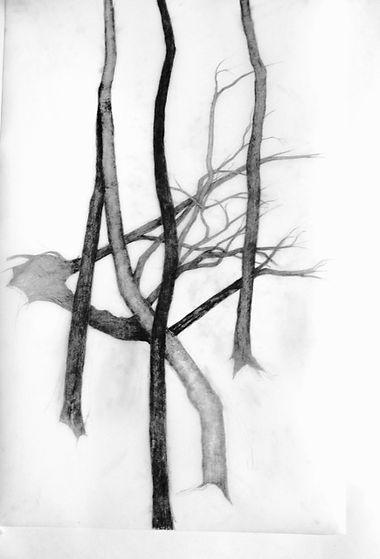 p tree 5.jpg
