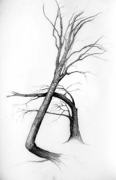 p tree 1.jpg
