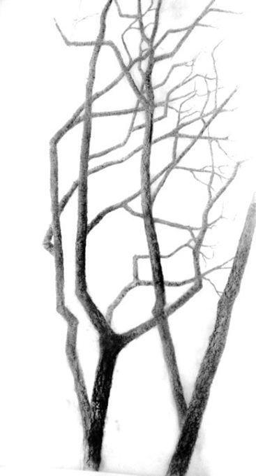 p tree 3.jpg
