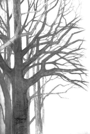p tree 4.jpg