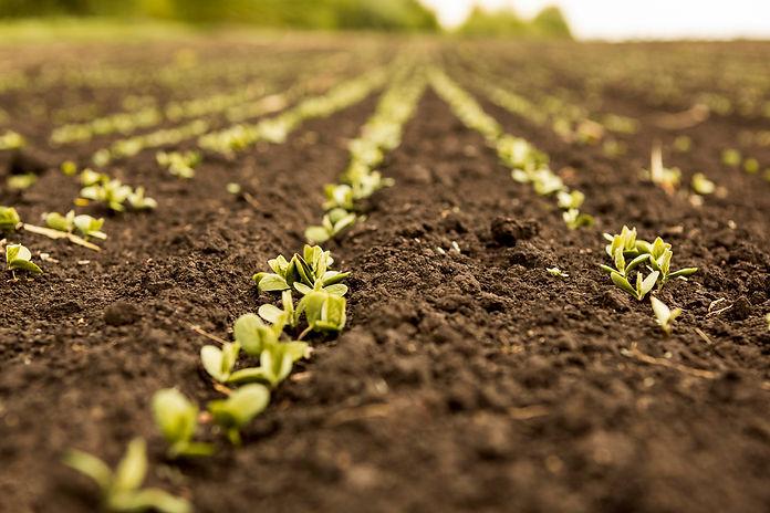 agricultura inteligente.jpg