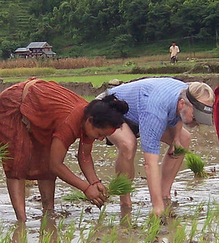 Riceplanting.jpg