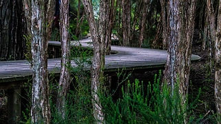 road-forest-3_600x337.jpg