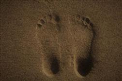 footsteps-6_500x333_180x120.jpg