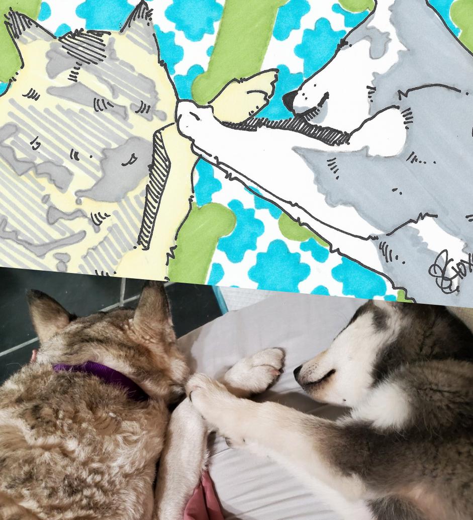 Luna and Lobo via Rachel L and Sara Scot