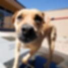 DogSelfie_1080x1080.png