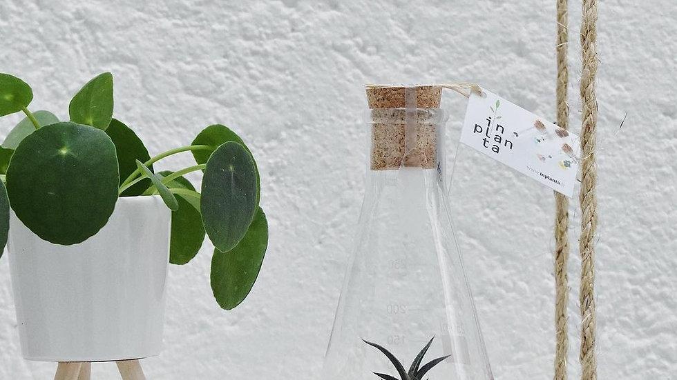 Inplanta Plantaphore 250g