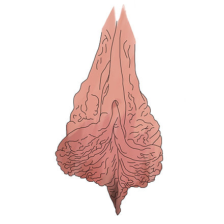 Wrinkly vulva only.jpg