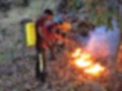 forestfire.jpg