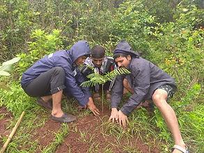treeplantation.jpg