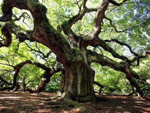 The Lessons of the mighty Oak