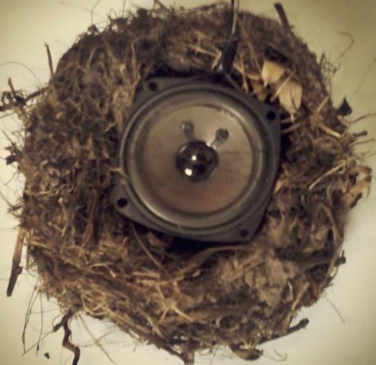 The myth of the bird