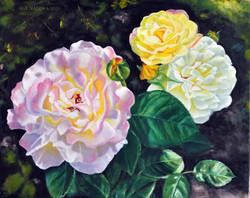 Podwórkowe róze