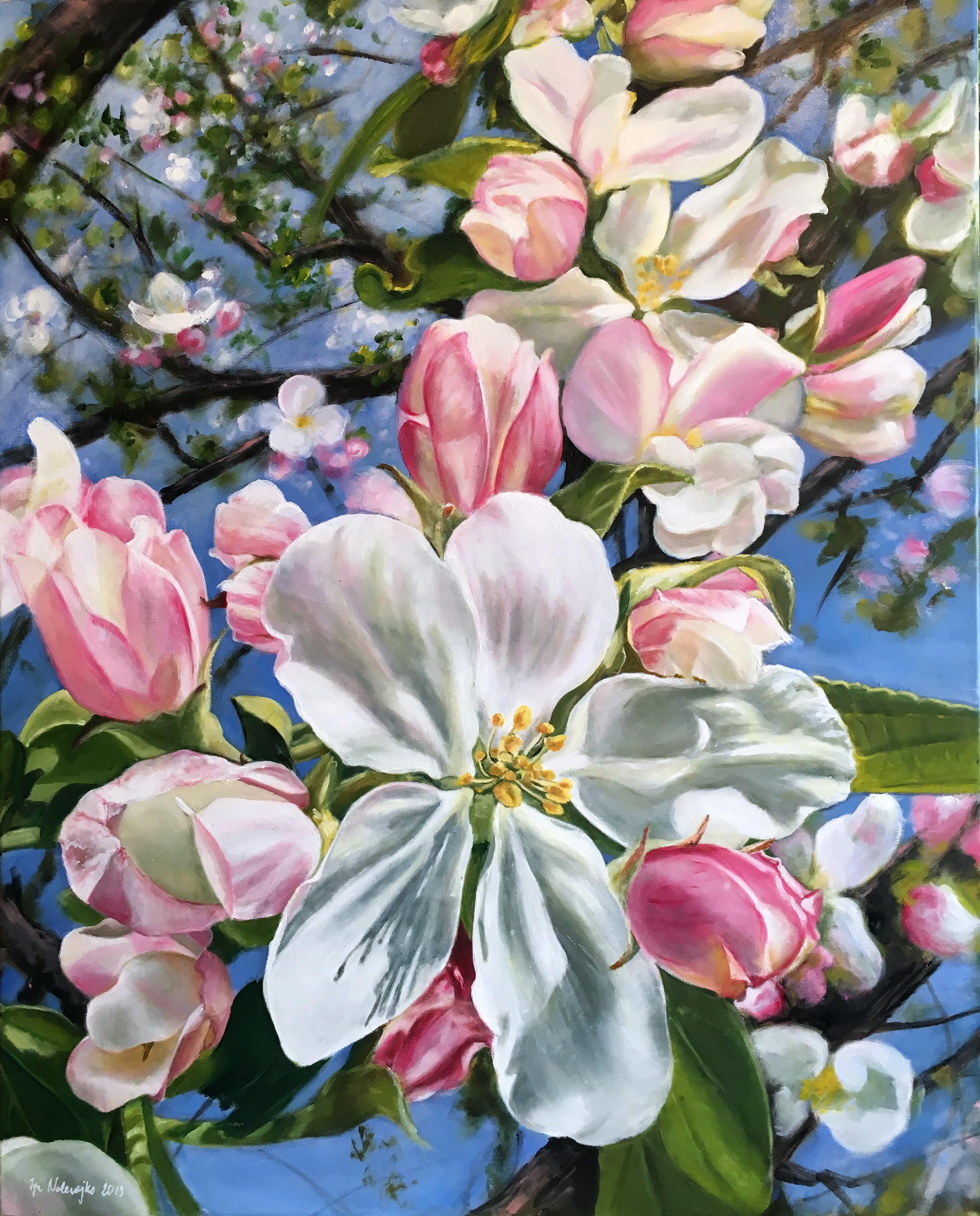 Jabłoń kwitnąca
