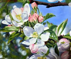 Znów zakwitły jabłonie...