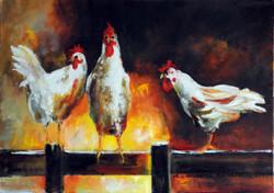 """""""Kurczaki na płocie"""""""