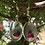 Thumbnail: Heart shape rose petal dangle earrings
