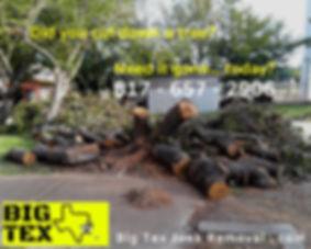EMERGENCY FALLEN TREE REMOVAL SERVICE DA