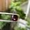 Thumbnail: 3.03Ct reddish orange spinel