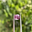 Thumbnail: 1.45Ct Soft Pink Spinel