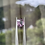 Thumbnail: 2.81Ct Purple Pink Spinel