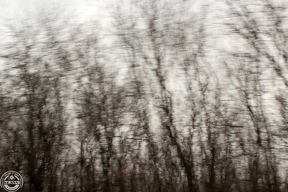 Bare trees in winter rush by on I65.