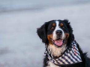Ein Hund im Buch – die wahre Geschichte hinter Lola