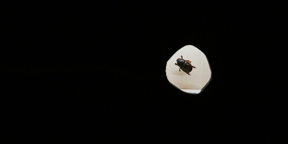 Последняя кураторская экскурсия по выставке «Жуки и гусеницы. Насекомая культура 1920-1940-х»