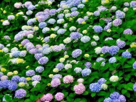 Japan has entered a rainy season!