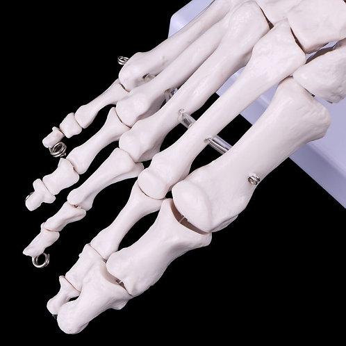 Medical foot teaching aid
